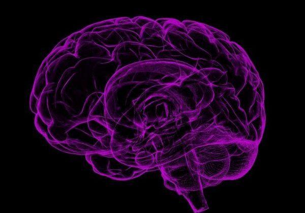brain-1787622_1280